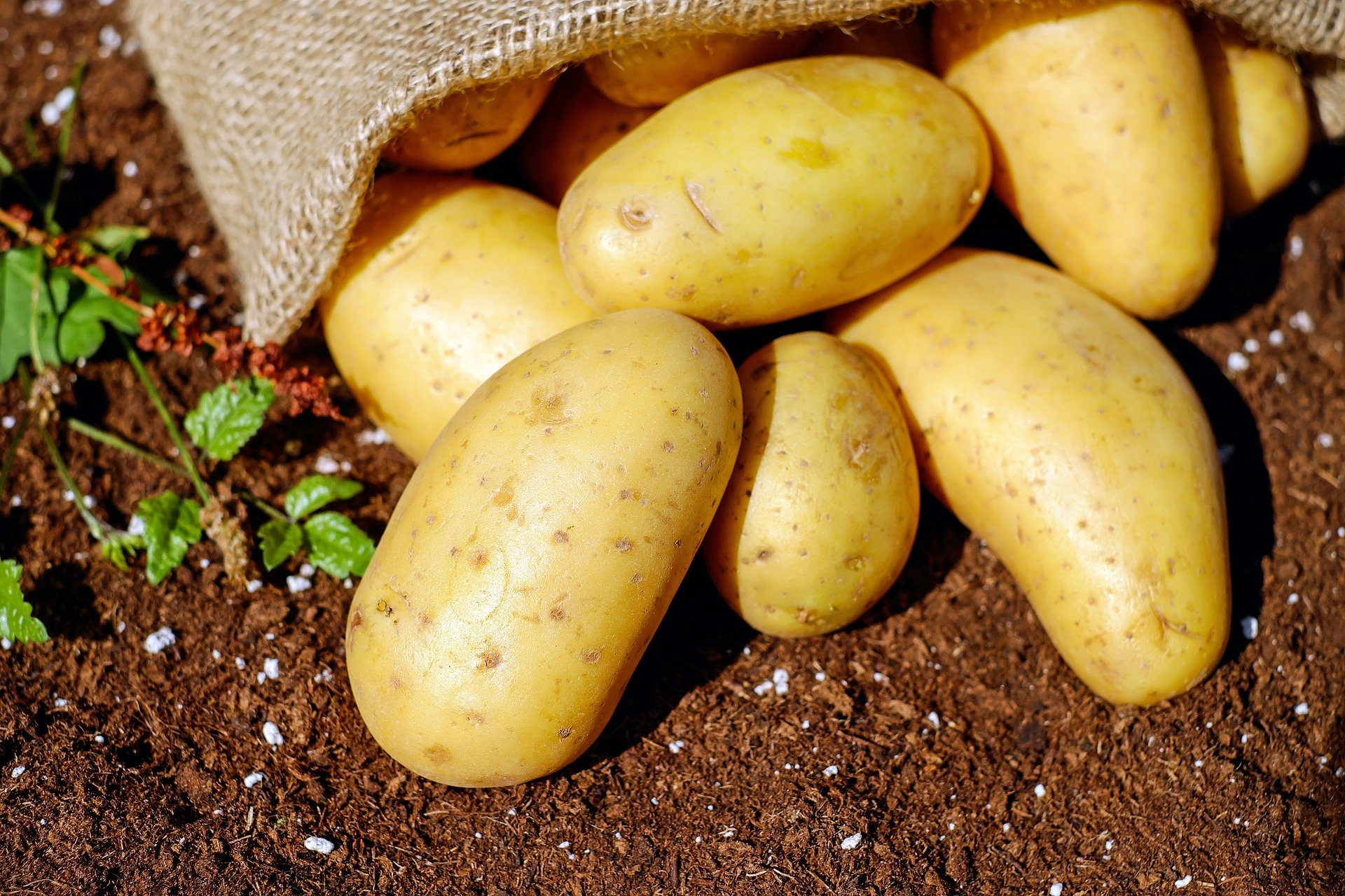 Importing Fresh potatoes